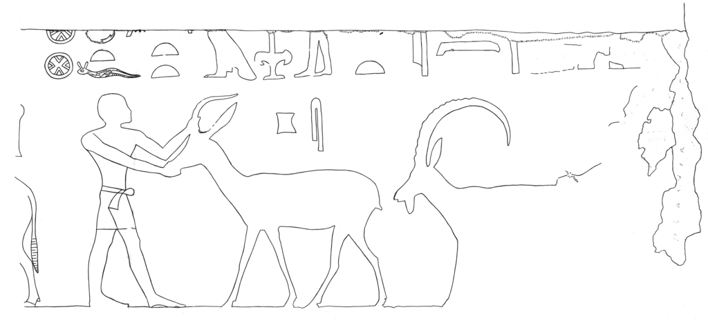 Drawings: G 5110: relief from E wall, S of door, S part, livestock procession