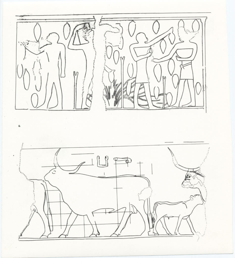 Drawings: G 6020: relief from Room B