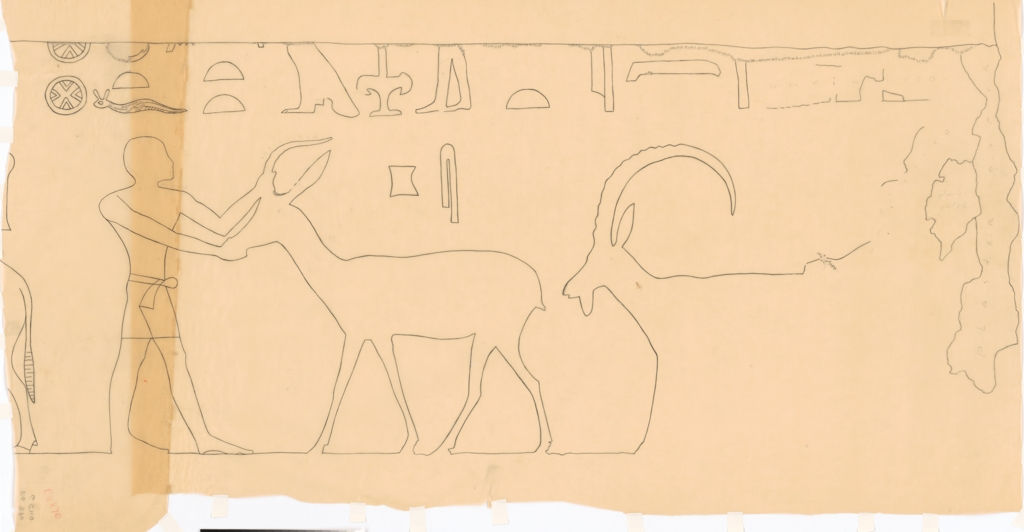 Drawings: G 5110: relief from E wall, S of door