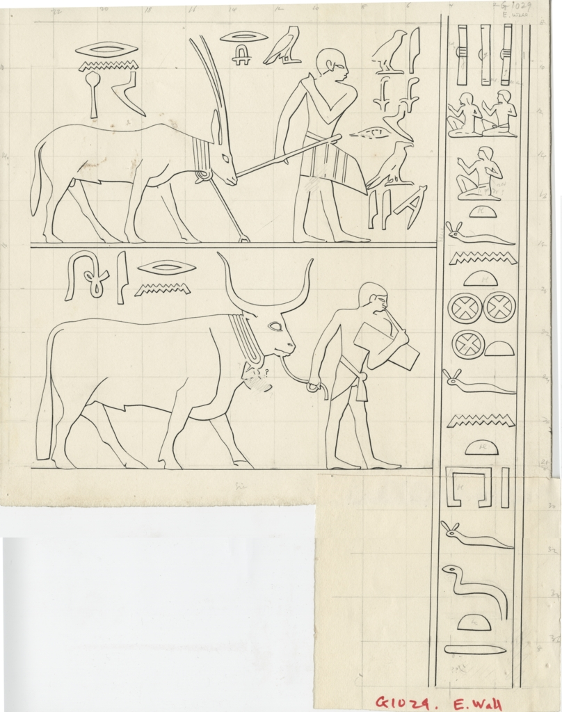Drawings: G 1029: relief from E wall, S end