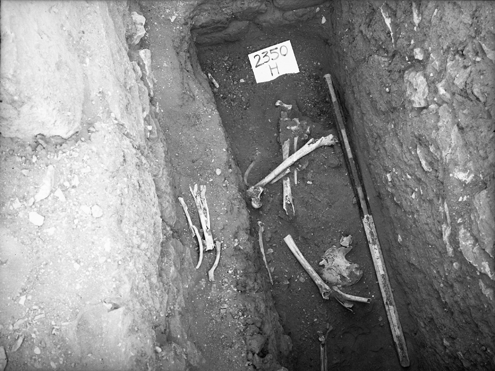 Western Cemetery: Site: Giza; View: G 2350 = G 5290