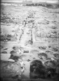Eastern Cemetery: Site: Giza; View: avenue G 2