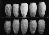 Object(s) photograph: Site: Giza; view: G 1152, G 1362, G 1157