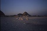 G I-South Cemetery: Site: Giza; View: G I-b, G I-c, Seshemnefer IV