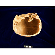 Object(s) photograph: Site: Giza; View: G 2227 (= G 2177)