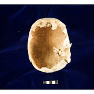 Object(s) photograph: Site: Giza; View: G 2413
