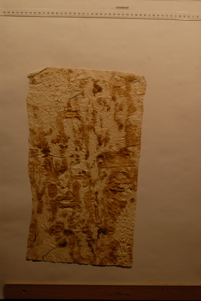 squeeze: Site: Giza; view: G 8154